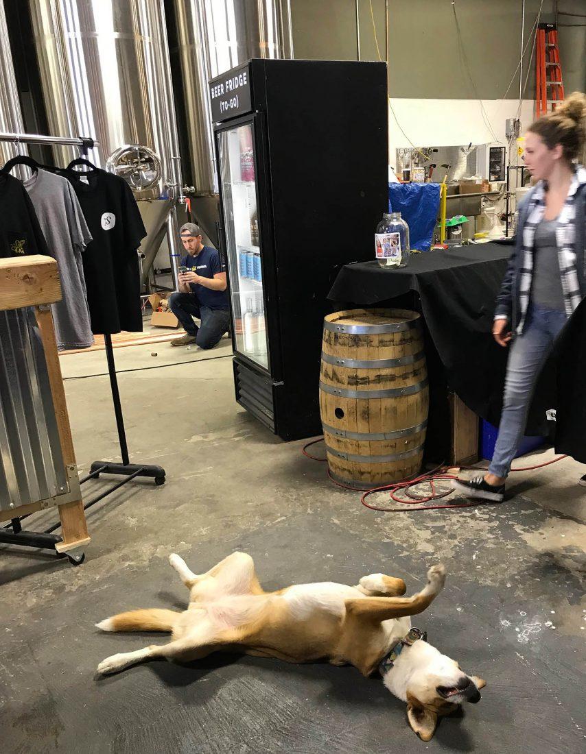 367. Seven Stills Distillery & Brewery, San Francisco CA, 2018